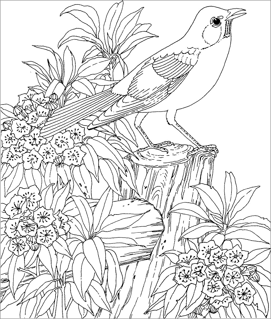 Nest There Bird Page While Coloring Sitting Christmas