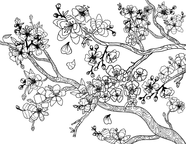 Cherry Blossom Adult Coloring Page