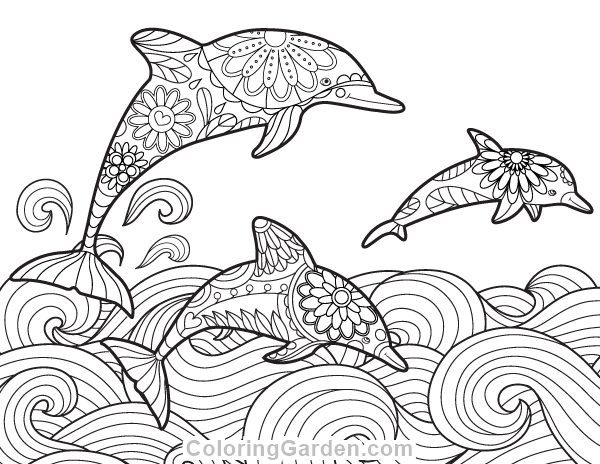 Dolphin Adult Coloring Page
