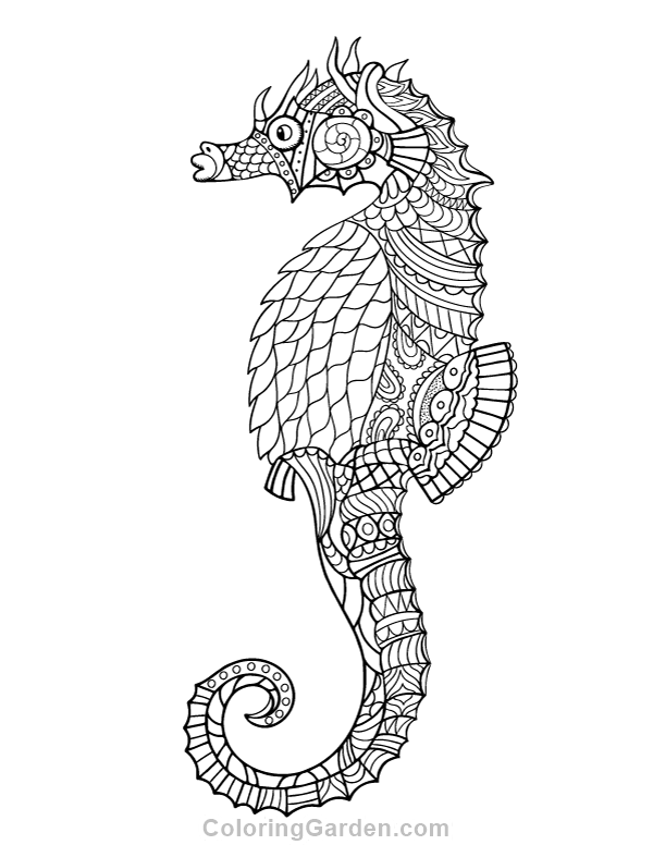 Seahorse Adult Coloring Page