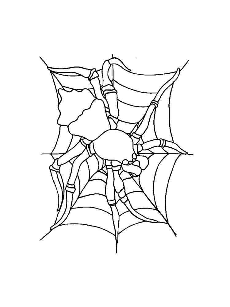 Ausmalbilder Spinne - Malvorlagen Kostenlos zum Ausdrucken