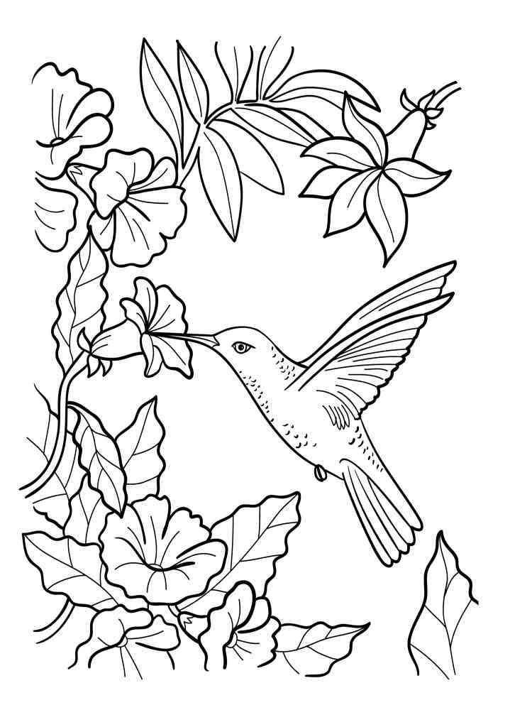 Ausmalbilder Kolibri - Malvorlagen Kostenlos zum Ausdrucken