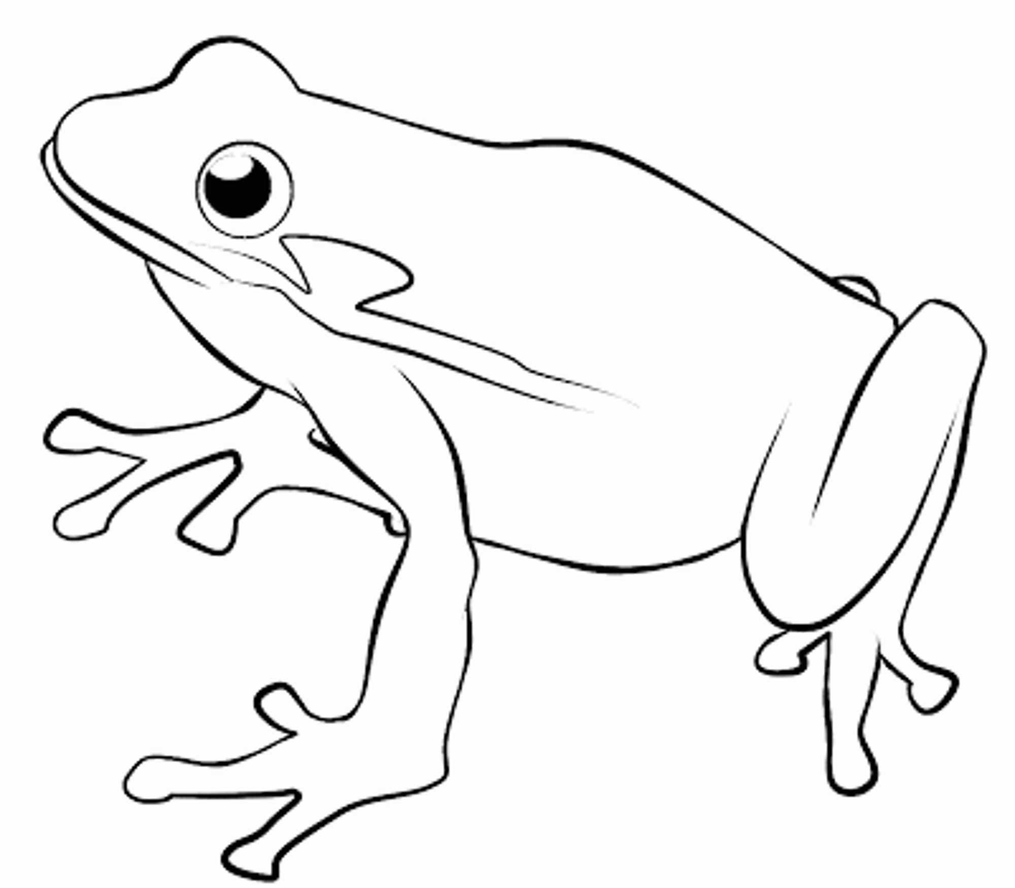 Free Printable Coloring Pages Of Frogs