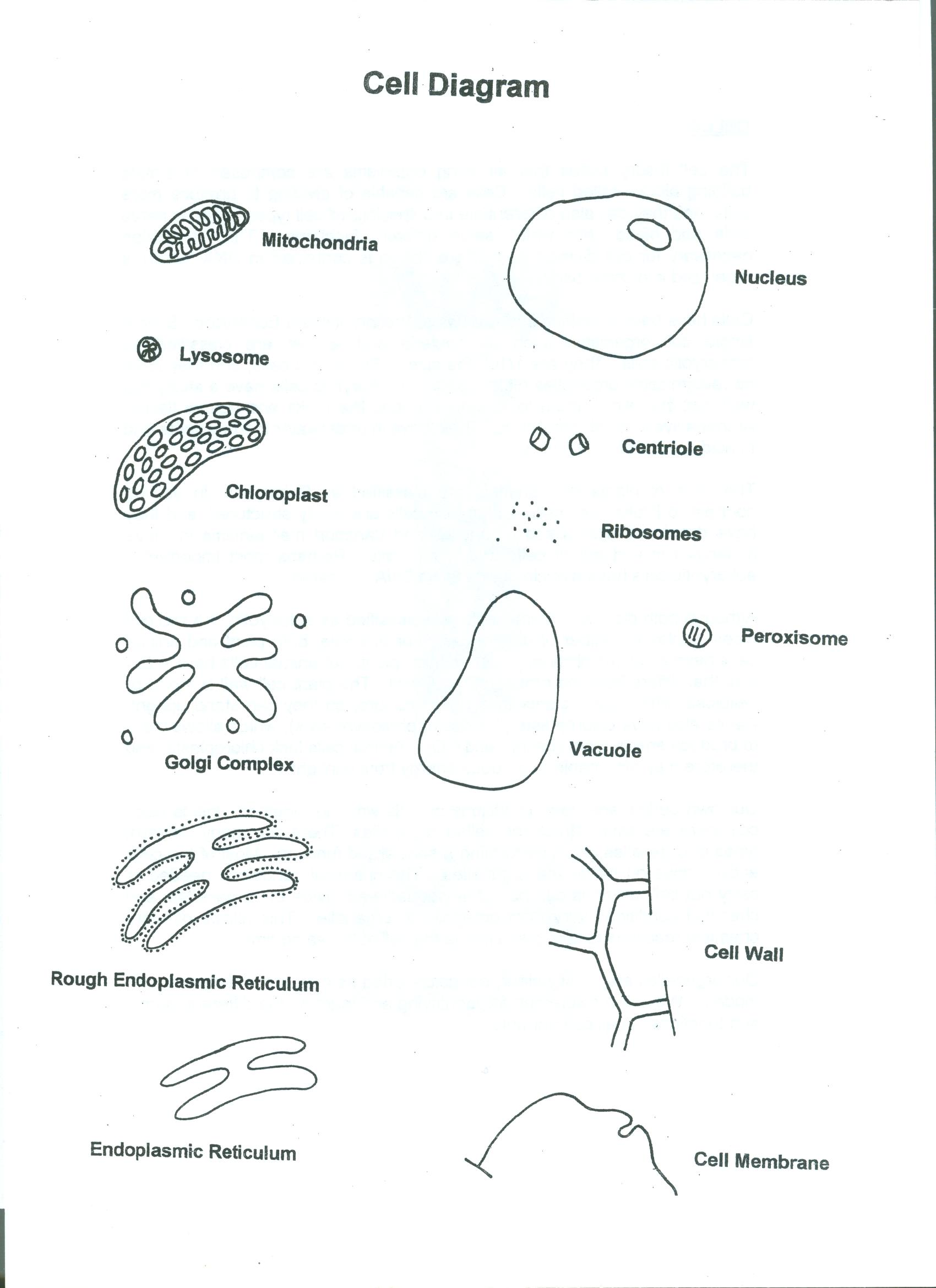 Cell Coloring Page
