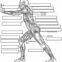 Human Muscular System Blank Diagram Vav Box Wiring Side Coloring Page Home