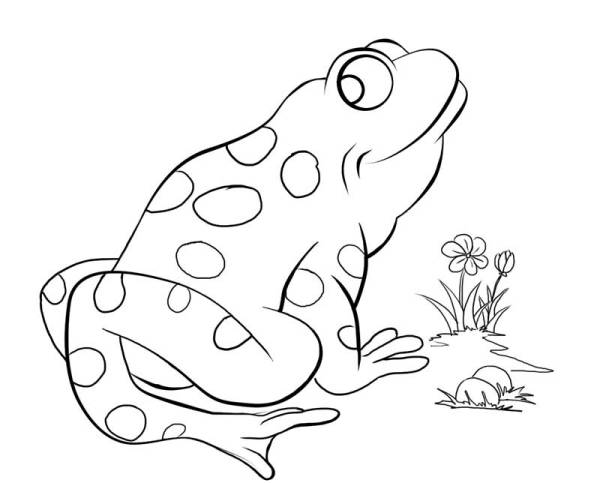 free coloring pages froggy learns to swim # 48