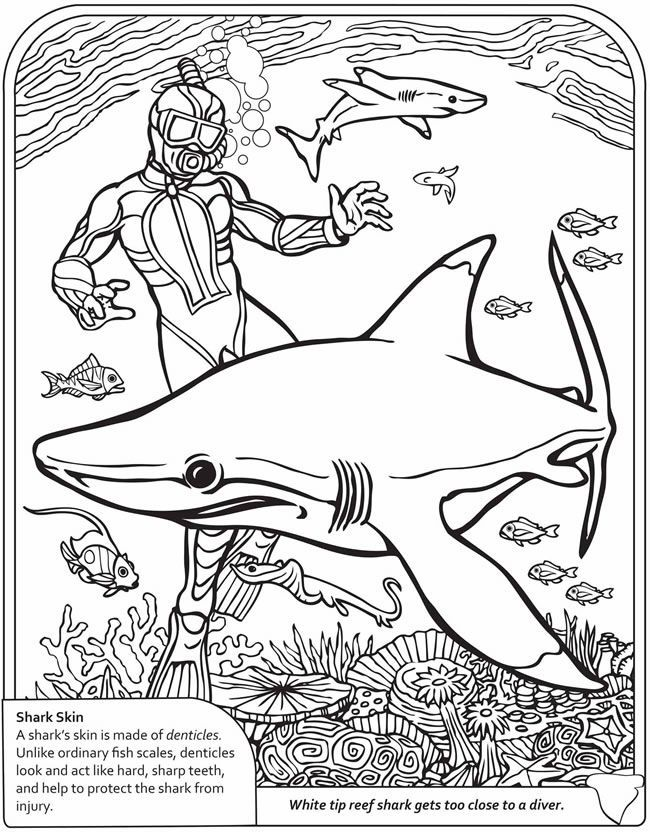2nd grade coloring pages  coloring home