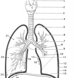 lung diagram printable wiring diagram expert lung diagram blank [ 1109 x 1376 Pixel ]