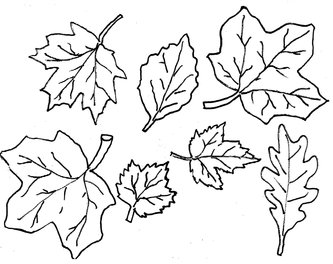 Leaves Coloring Pages Printable