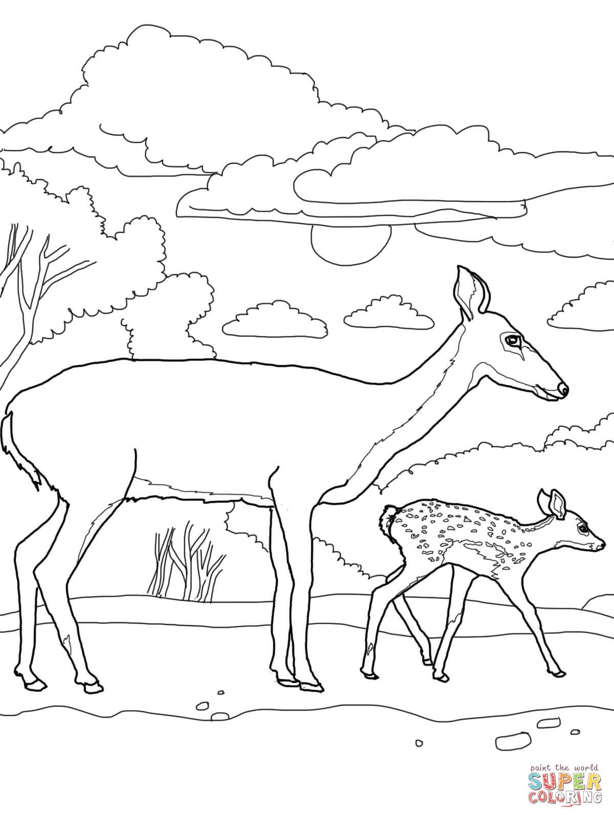 Baby Deer Coloring Page