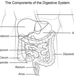 human digestive system coloring page free printable coloring pages [ 1199 x 899 Pixel ]