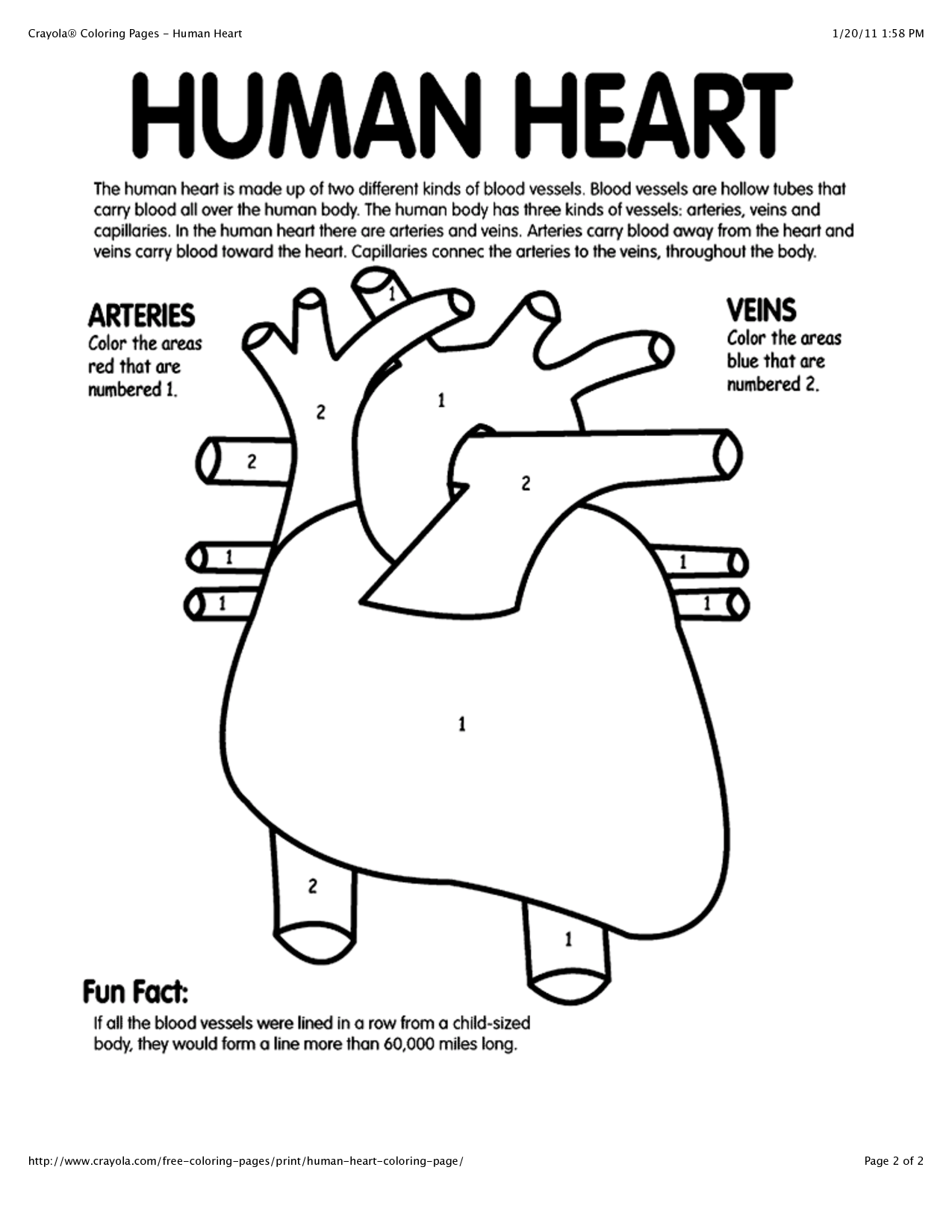 Real Heart Coloring Pages