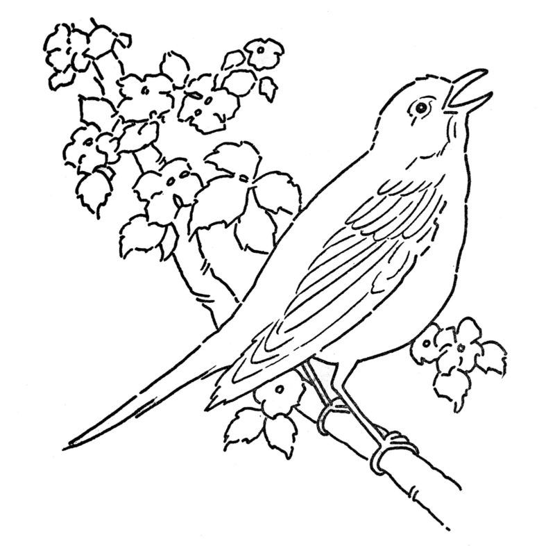 Coloring Pages Flowers And Birds State Birds And Flowers