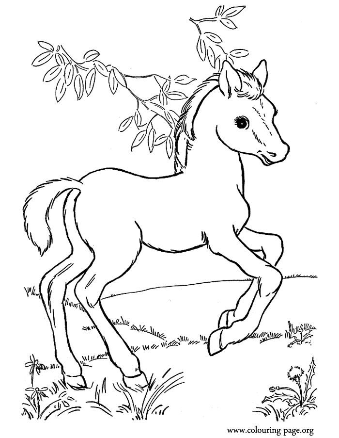 Baby Horse Coloring Pages : horse, coloring, pages, Horses, Coloring, Pages