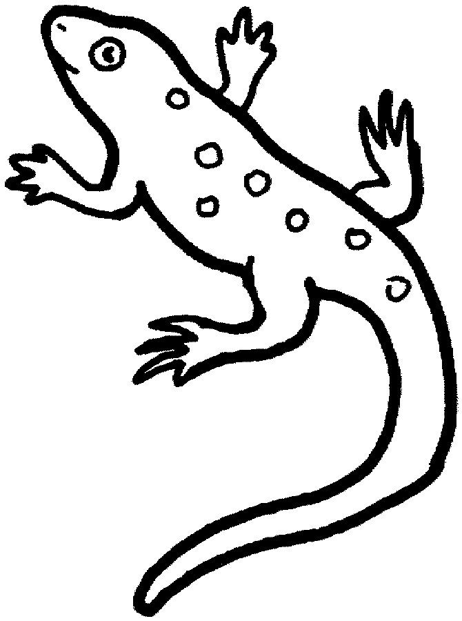 Lizard Coloring Sheet : lizard, coloring, sheet, Lizard, Coloring, Sheets