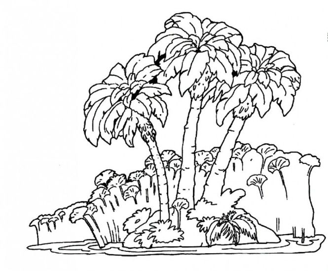 Rainforest Trees Coloring Pages Online Princess