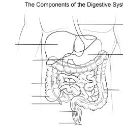 digestive system worksheet coloring page free printable coloring  [ 1375 x 899 Pixel ]