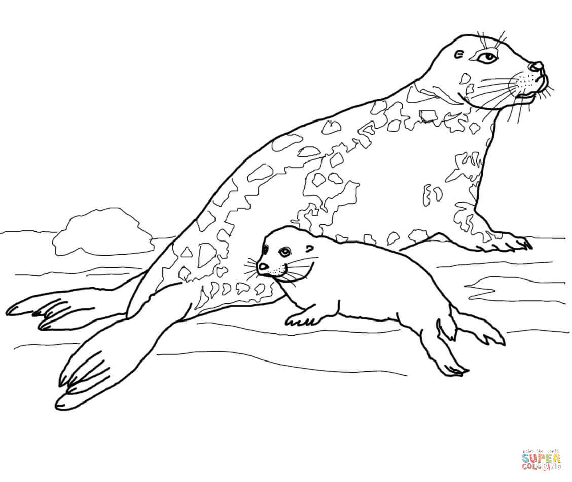 Gray Seal Mother And Baby Coloring Page Free Printable Coloring Coloring Home
