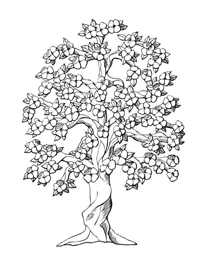 Printable Coloring Pages Trees Coloring Home