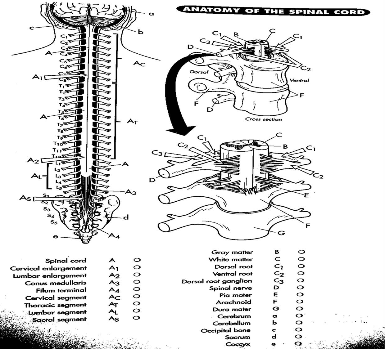 Anatomy And Physiology Free Coloring Pages