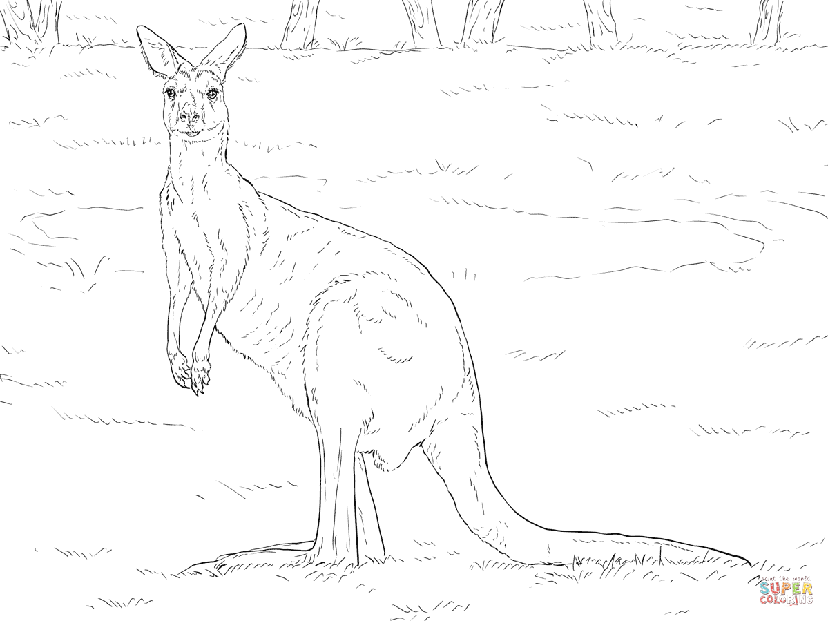 Kangaroos Coloring Pages