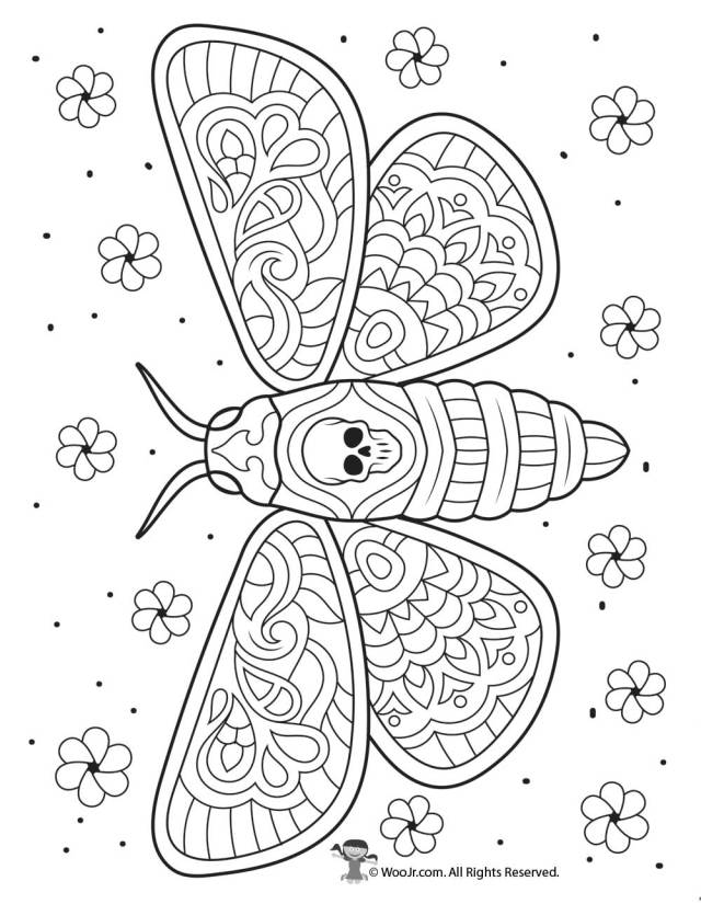 Moth Coloring Pages - Coloring Home