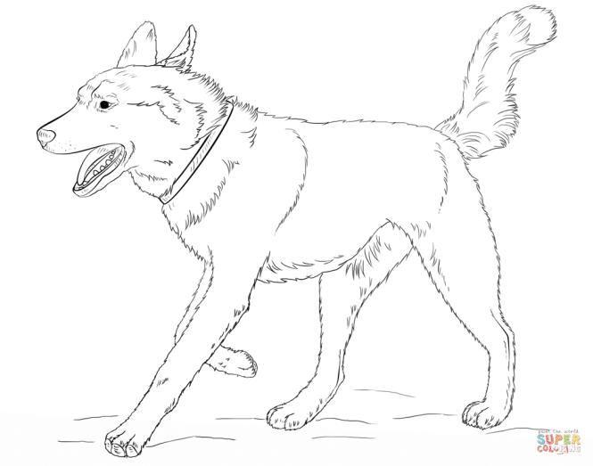 Siberian Husky Dog Coloring Page Free Printable Pages