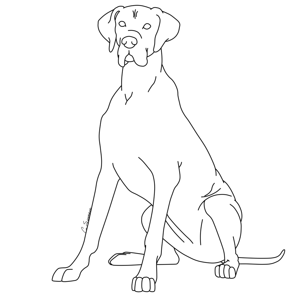 13 Pics Of Great Dane Animal Coloring Pages