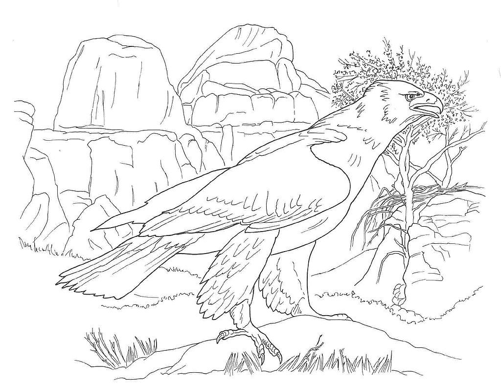 12 Pics Of Desert Bird Coloring Page