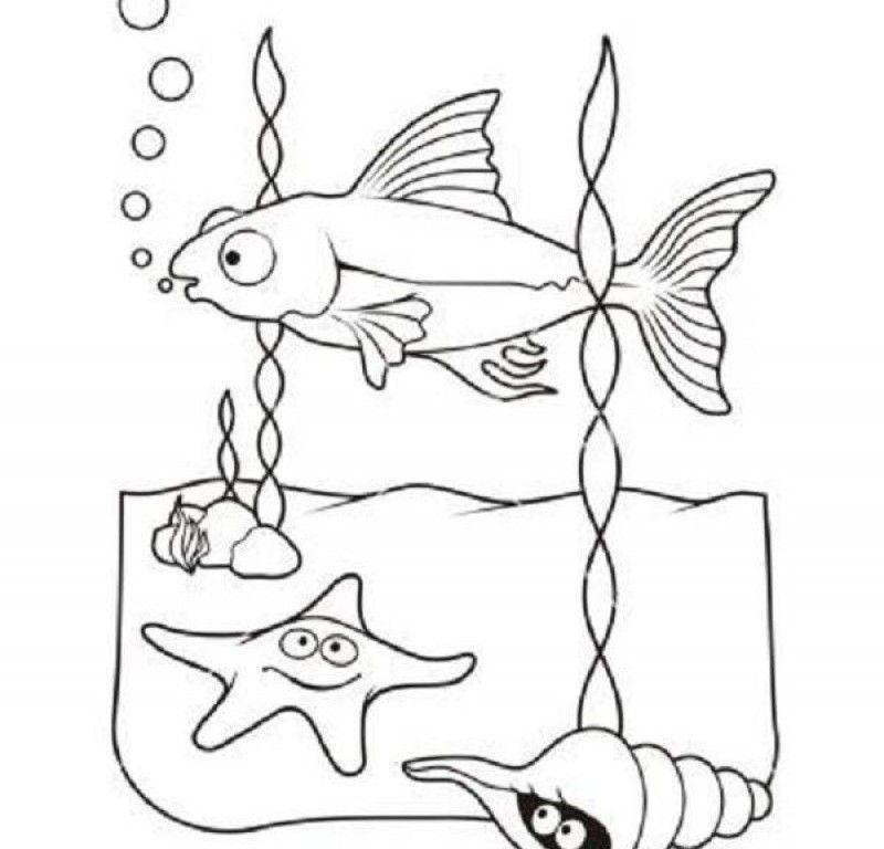 Sea Lion Life Cycle Diagram Sketch Coloring Page