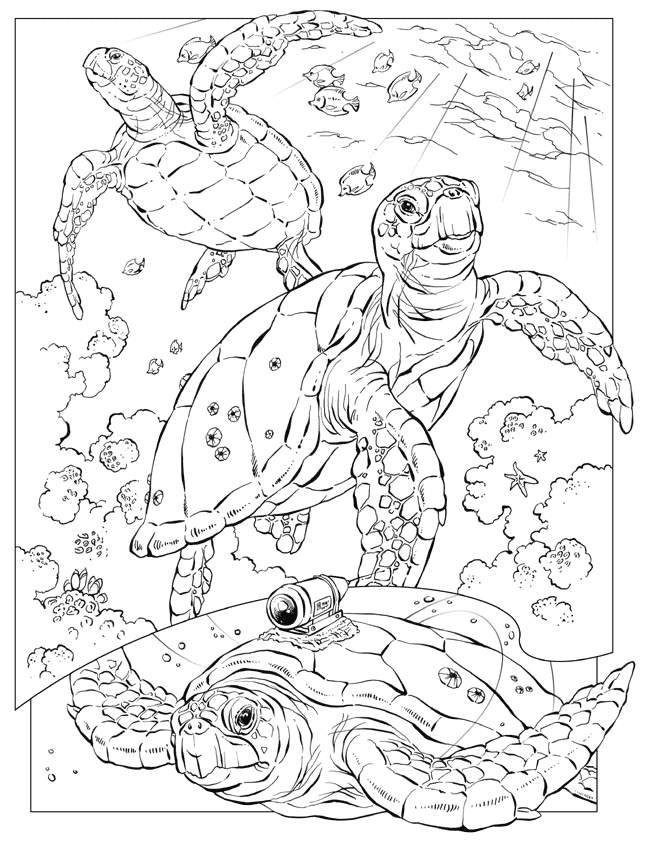 Free Printable Ocean Coloring Pages For Adults : printable, ocean, coloring, pages, adults, Ocean, Coloring, Pages, Adults