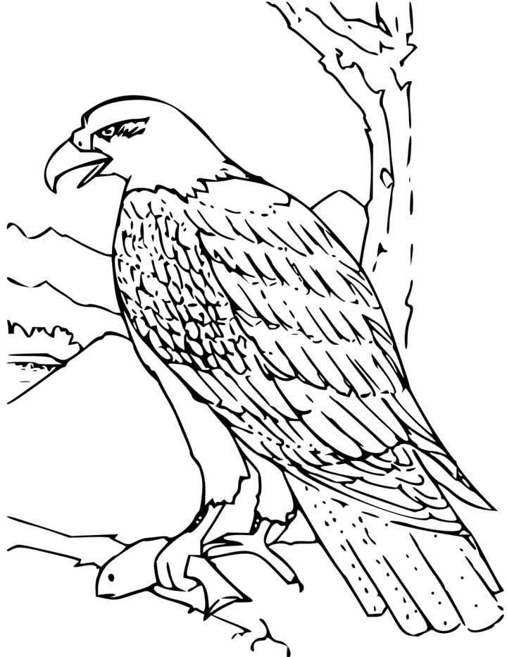 Coloring Pages Of Eagles Coloring Home