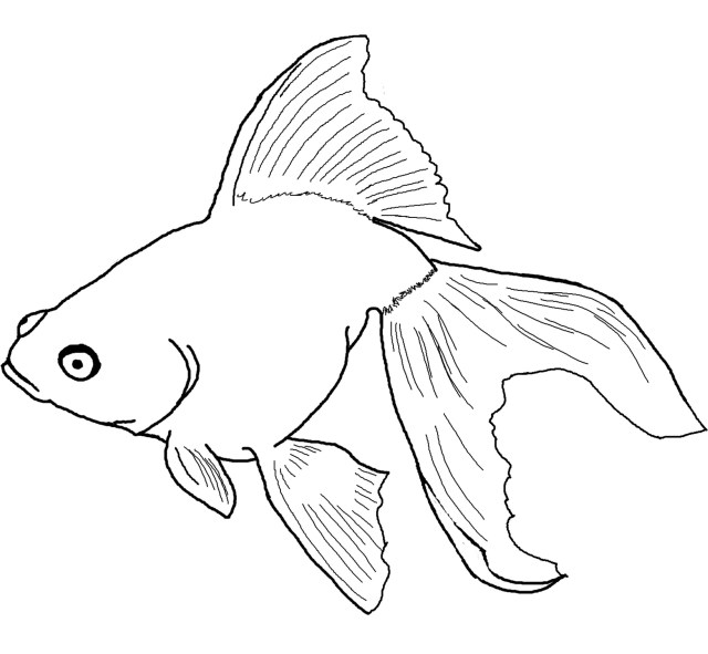 Free Printable Goldfish Coloring Pages For Kids - Coloring Home