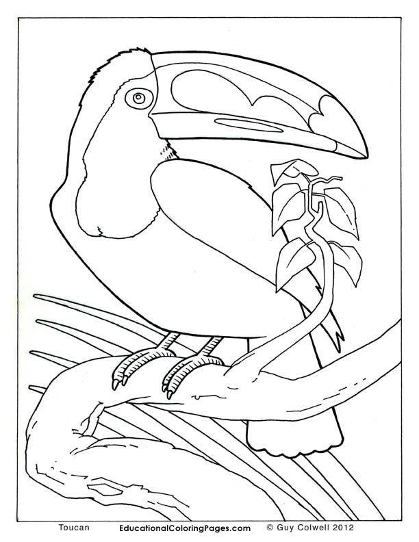 Realistic Animal Coloring Pages : realistic, animal, coloring, pages, Realistic, Animal, Coloring, Pages
