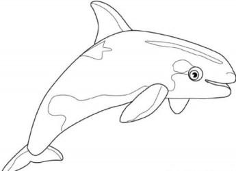 Beluga Whale Cartoon Coloring Home