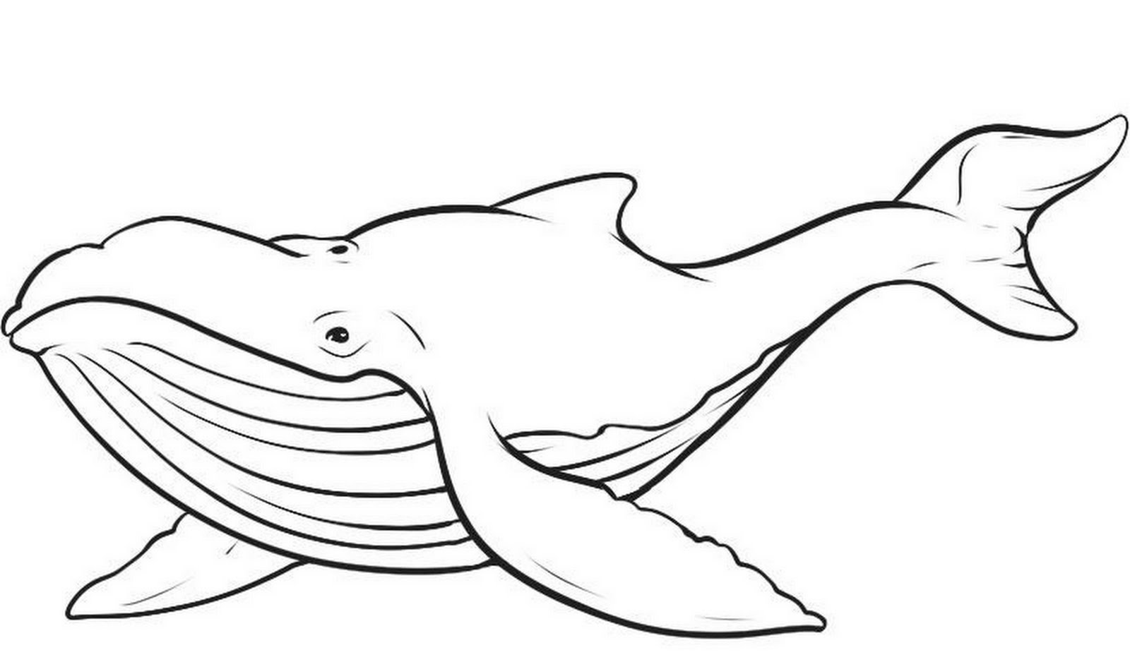 Whale Coloring Pages 3 Coloring Kids