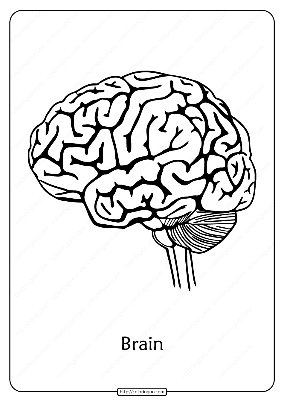 Free Printable Biology Outline Pdf Coloring Page