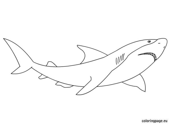 great white shark coloring page # 4