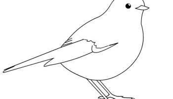 bird printable - Printable Bird Pictures 2