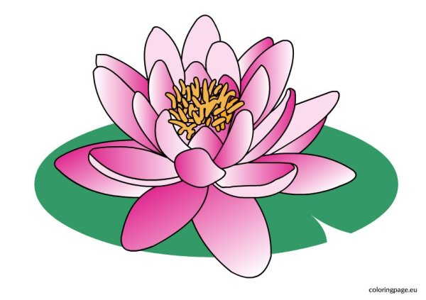 water lily clipart coloring page