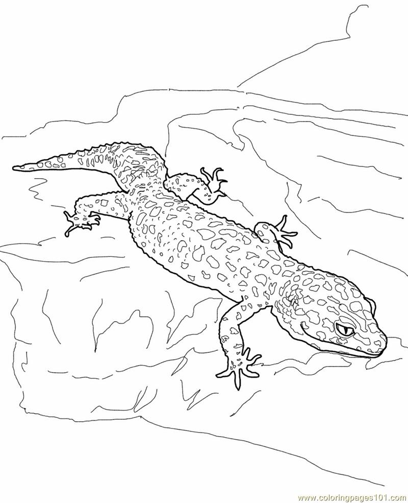 Lizard Coloring Sheet : lizard, coloring, sheet, Leopard, Gecko, Lizard, Coloring, Printable, Pages, Online, ColoringPages101.com