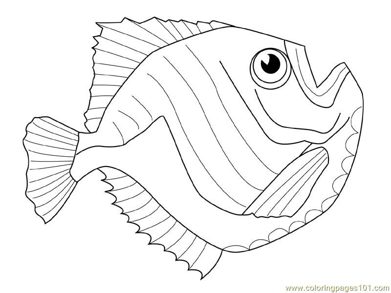 Slippery Fish Coloring Pages Coloring Pages