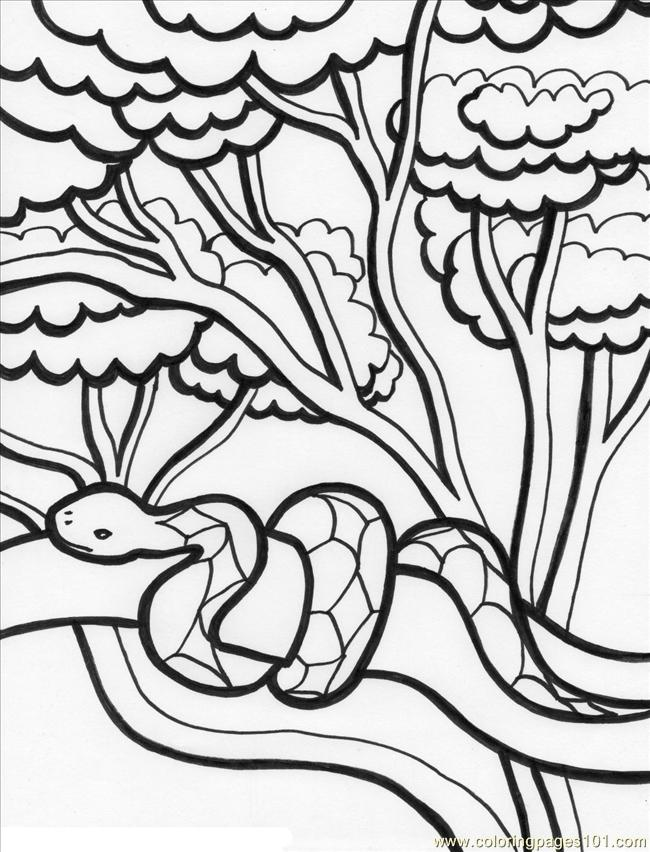 coloring pages rainforest%2b2 (natural world > forest