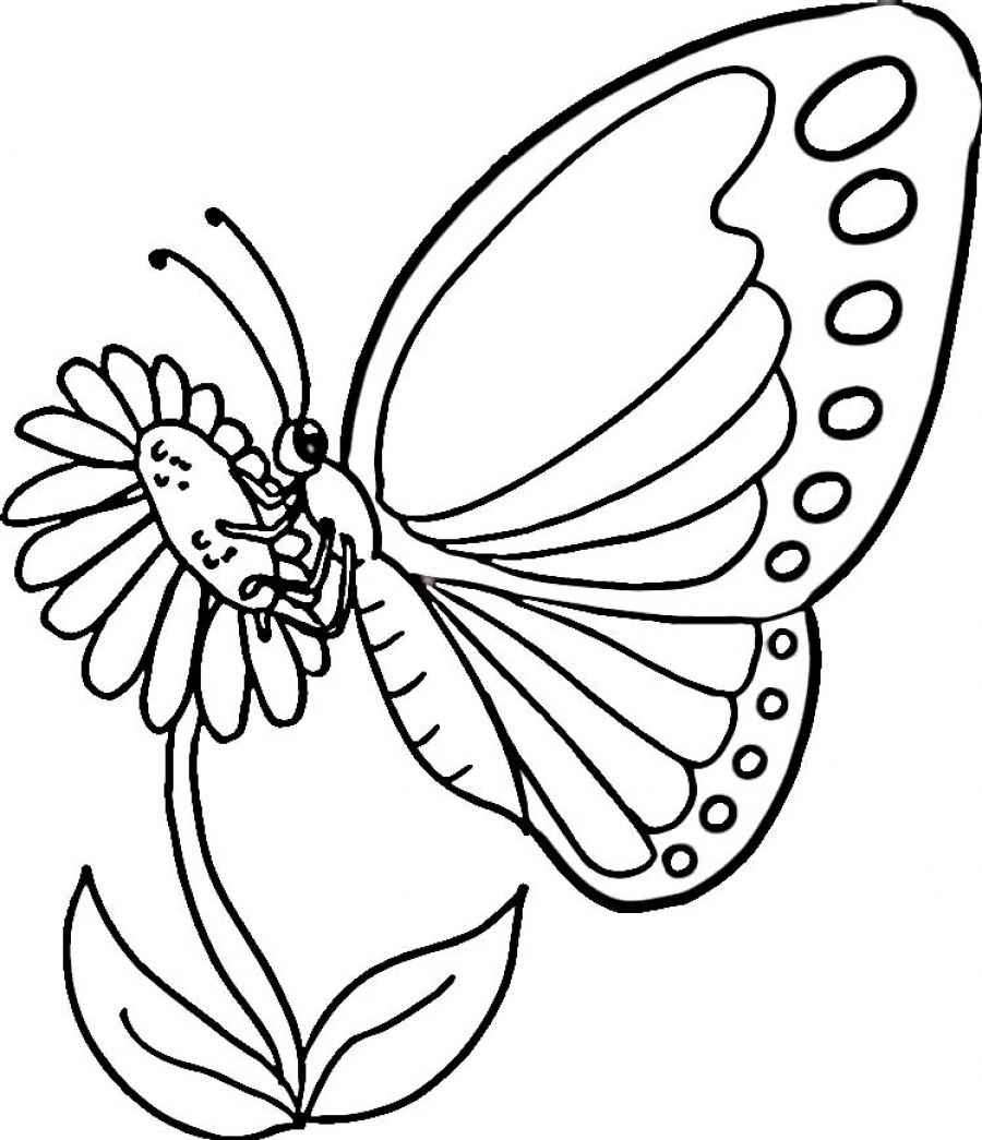 butterfly colouring pages free printable