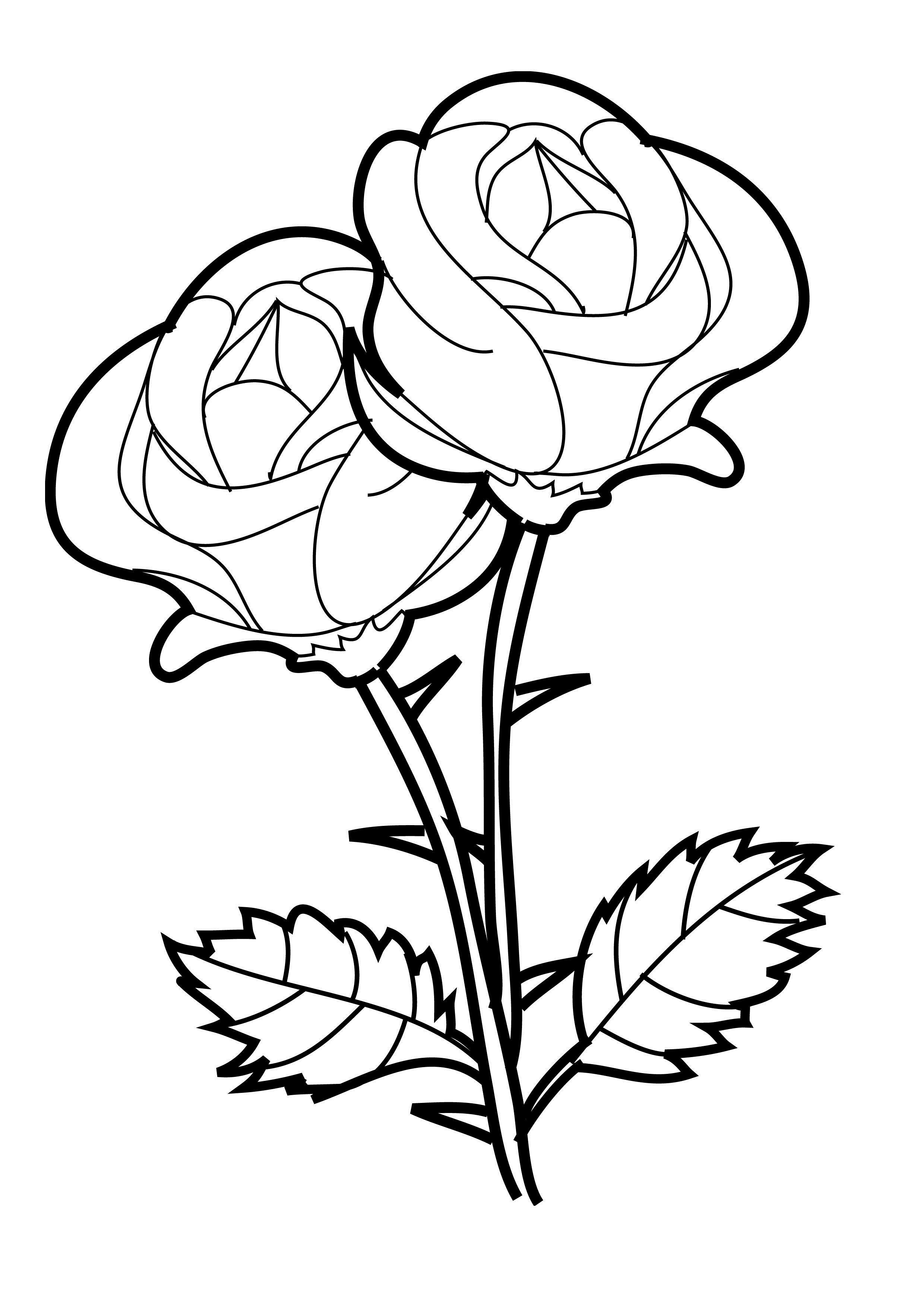 Rose Coloring Pages for Girls - Coloring Pages