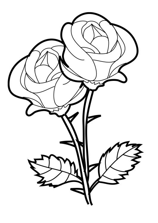 Rose-two-flowers-Coloring-Page