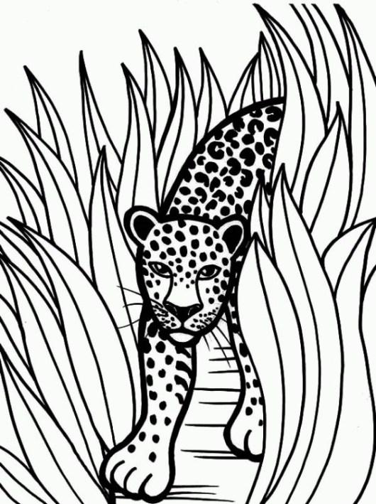 jaguar-coloring-pages-02