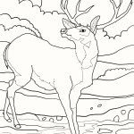 deer-coloring-pages-04