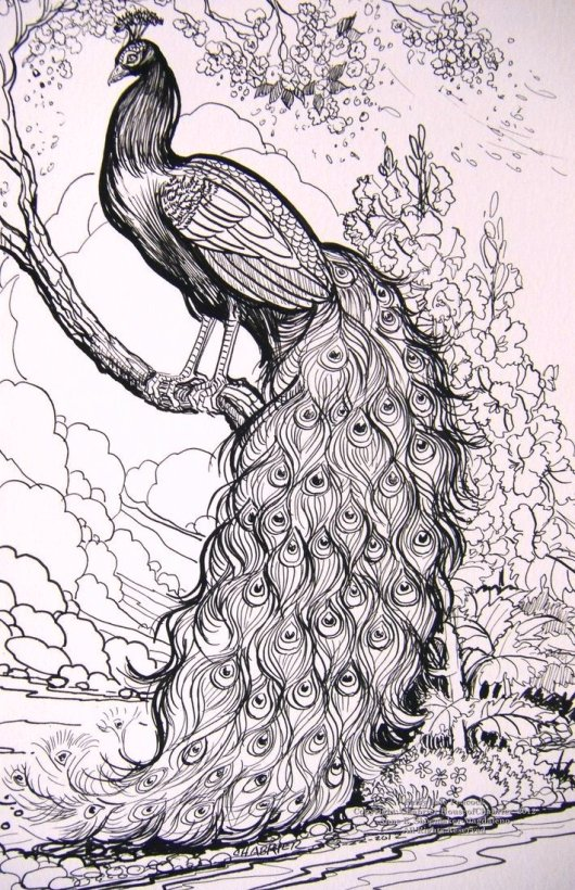 fairy_tale_peacock_coloring_pages