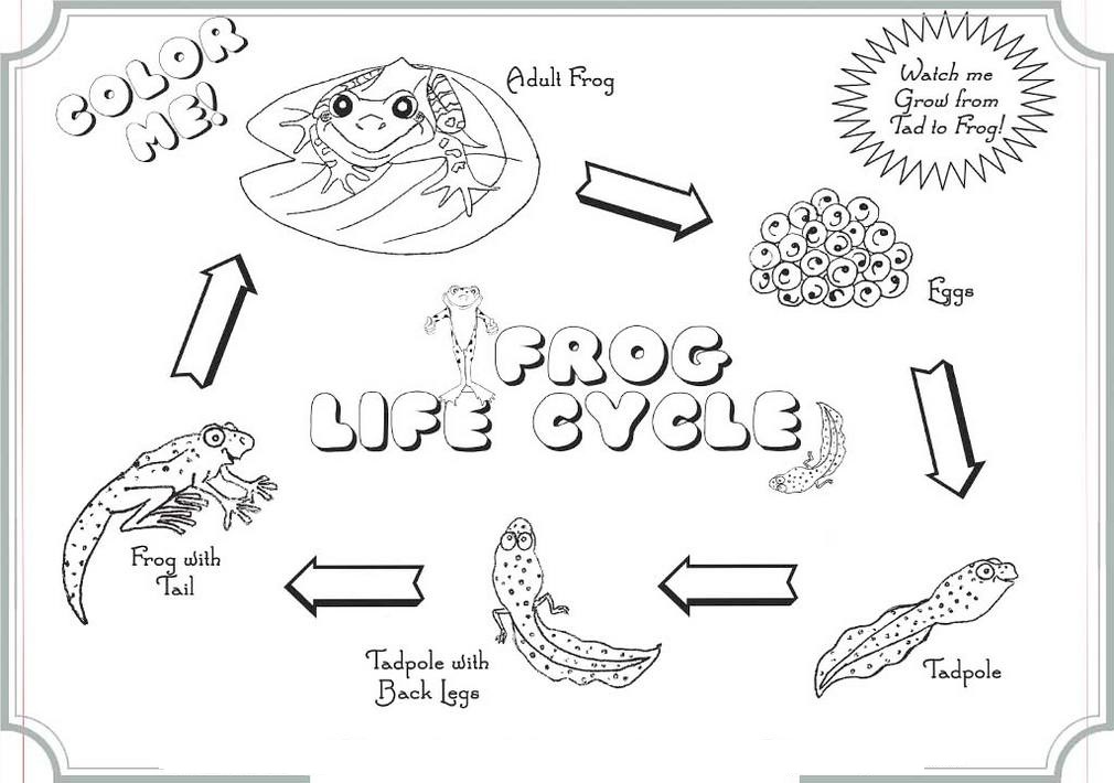 The-Life-Cycle-Of-Frog-Coloring-Books